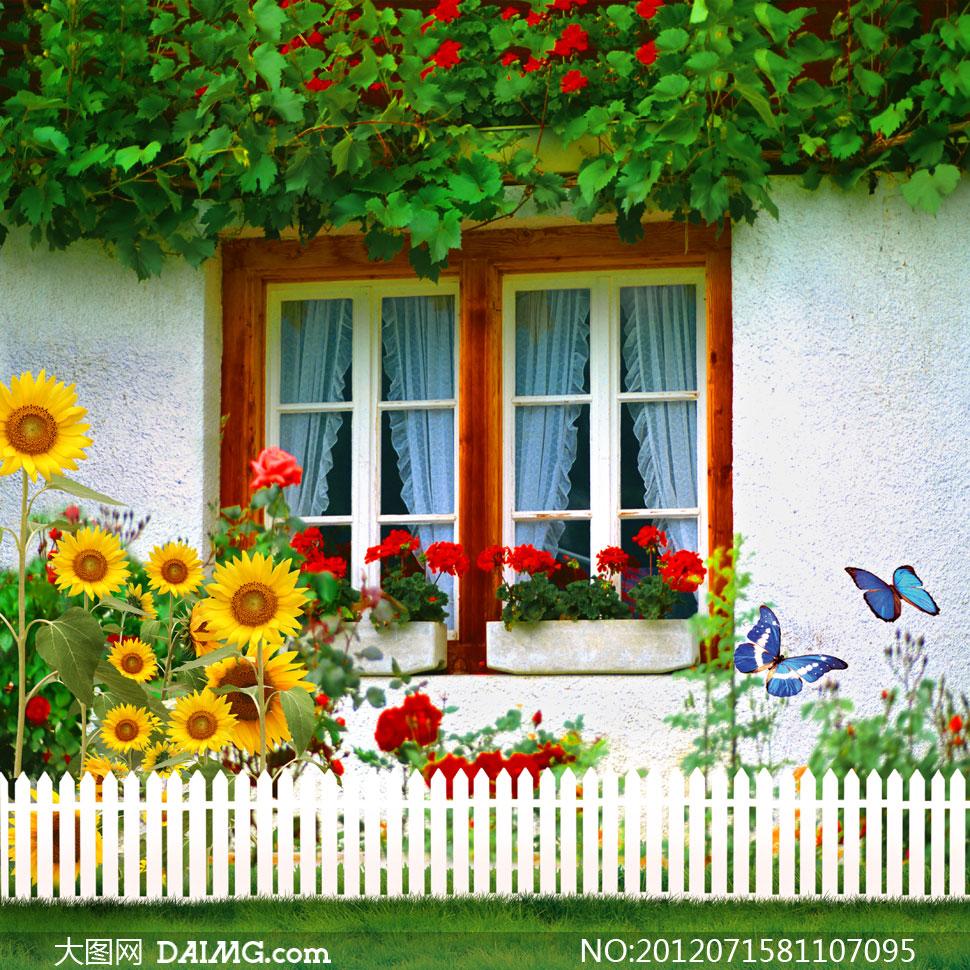 开满鲜花的窗户影楼摄影背景图片