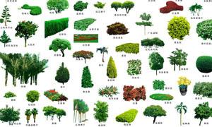 树木俯视图标_树木简笔画