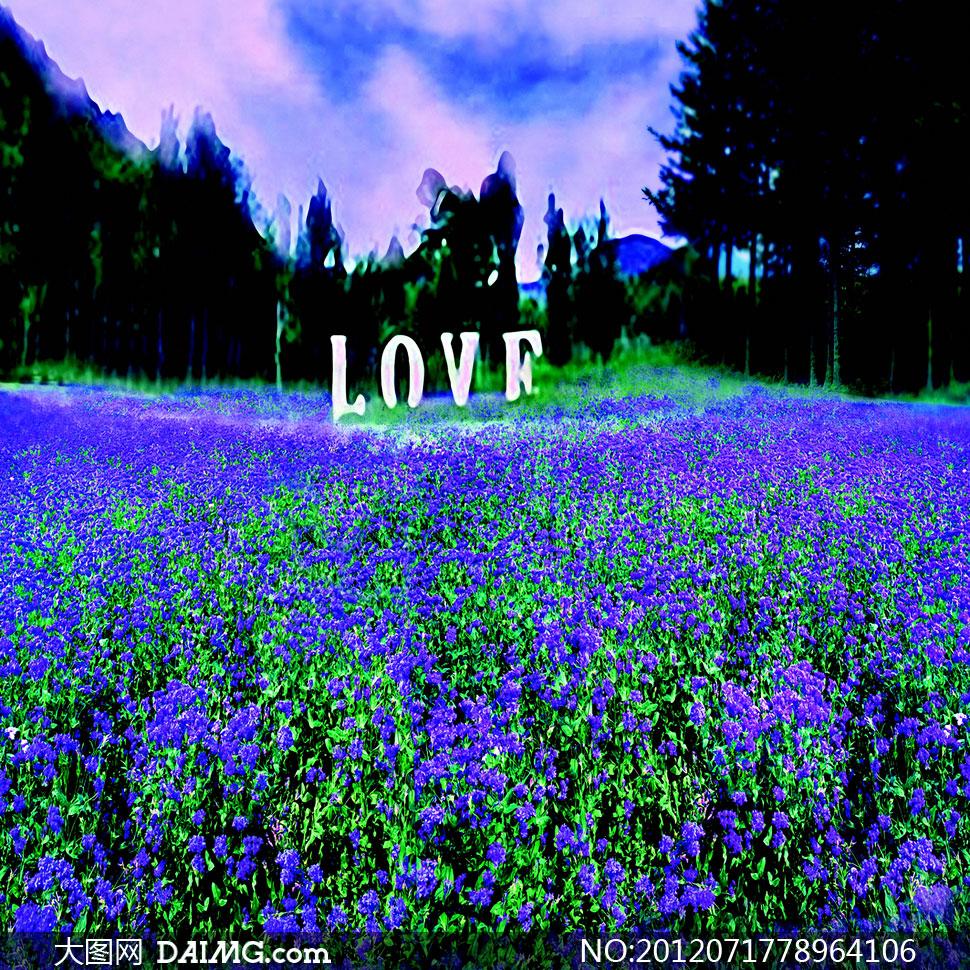 藍紫色花朵田地影樓攝影背景圖片 - 大圖網設計素材