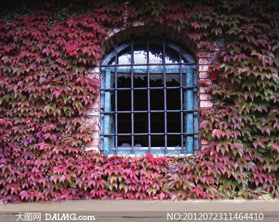 爬山虎植物与铁窗影楼摄影背景图片 - 大图网设计素材图片