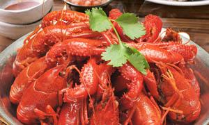 新鲜精品龙虾摄影图片