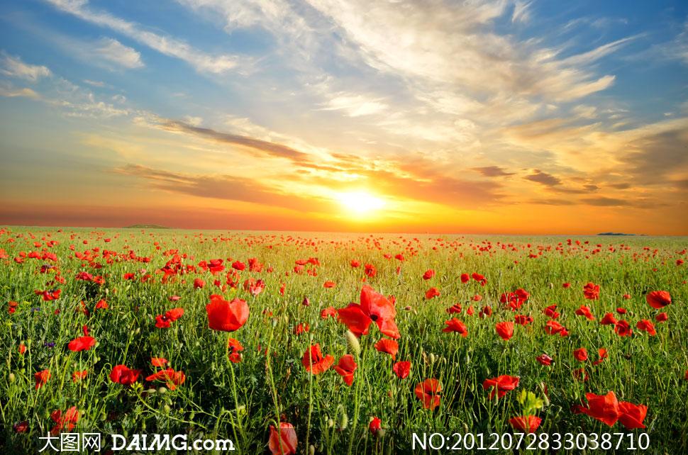 壁纸 成片种植 风景 植物 种植基地 桌面 970_642