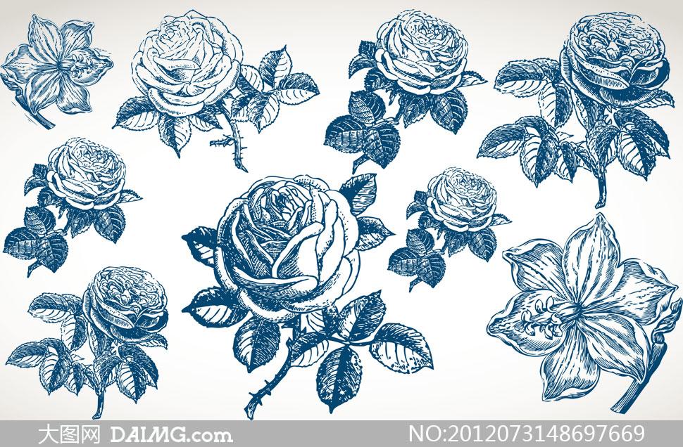 powere 素描玫瑰花的画法图-玫瑰 画法大全 素描玫瑰画法过程图 红