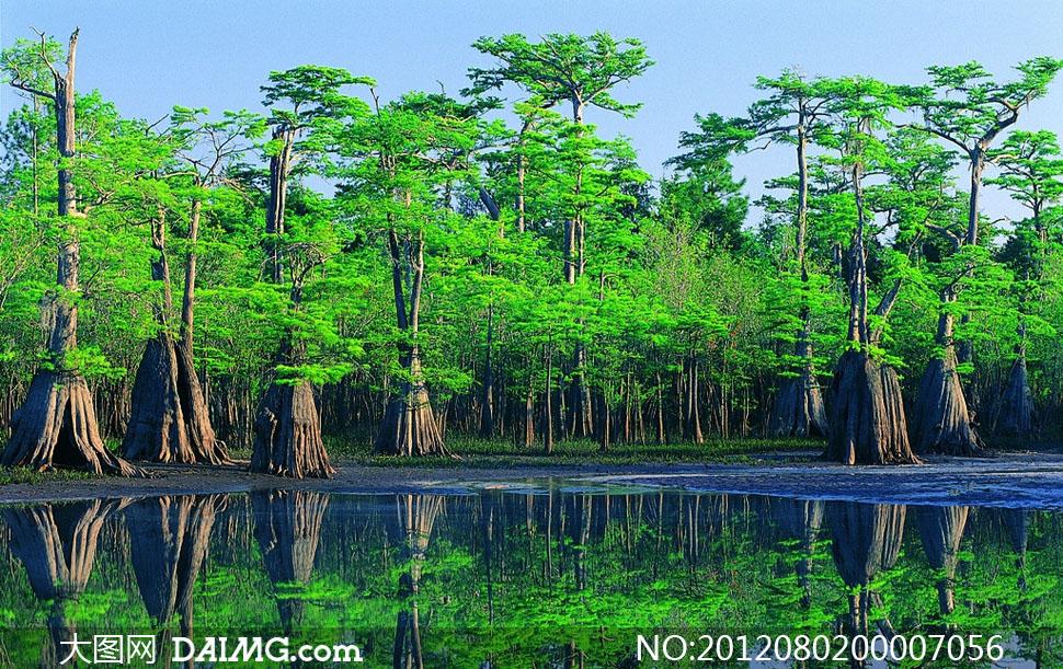 高清河边树林倒影摄影图片