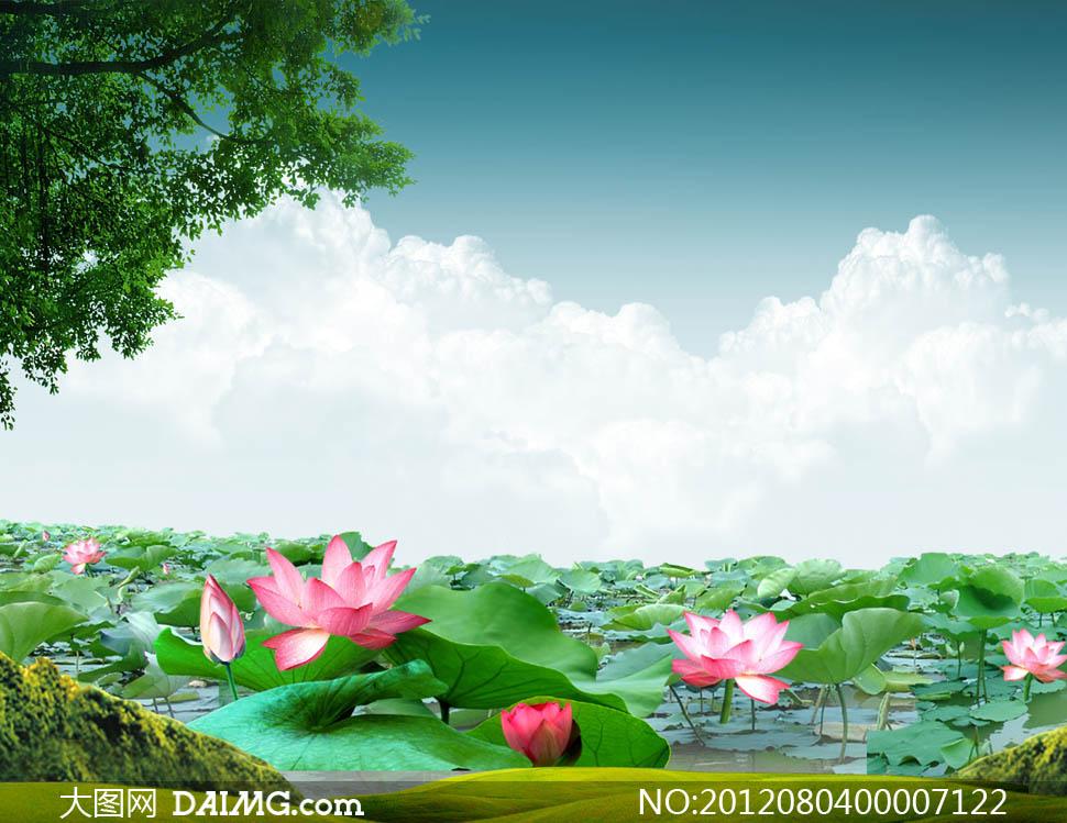 关键词: 荷花池荷花蓝天白云云彩池边树叶绿叶池塘满堂荷花绿地草地