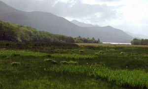 绿色草地田园风格摄影图片