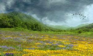 漫山遍野的花朵摄影图片