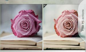 玫瑰花淡雅怀旧效果调色动作