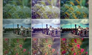 花朵照片唯美紫色调调色动作