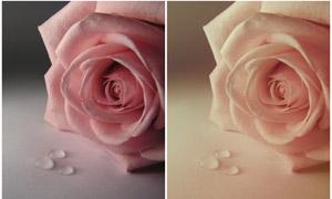 静物照片甜美粉色效果调色动作