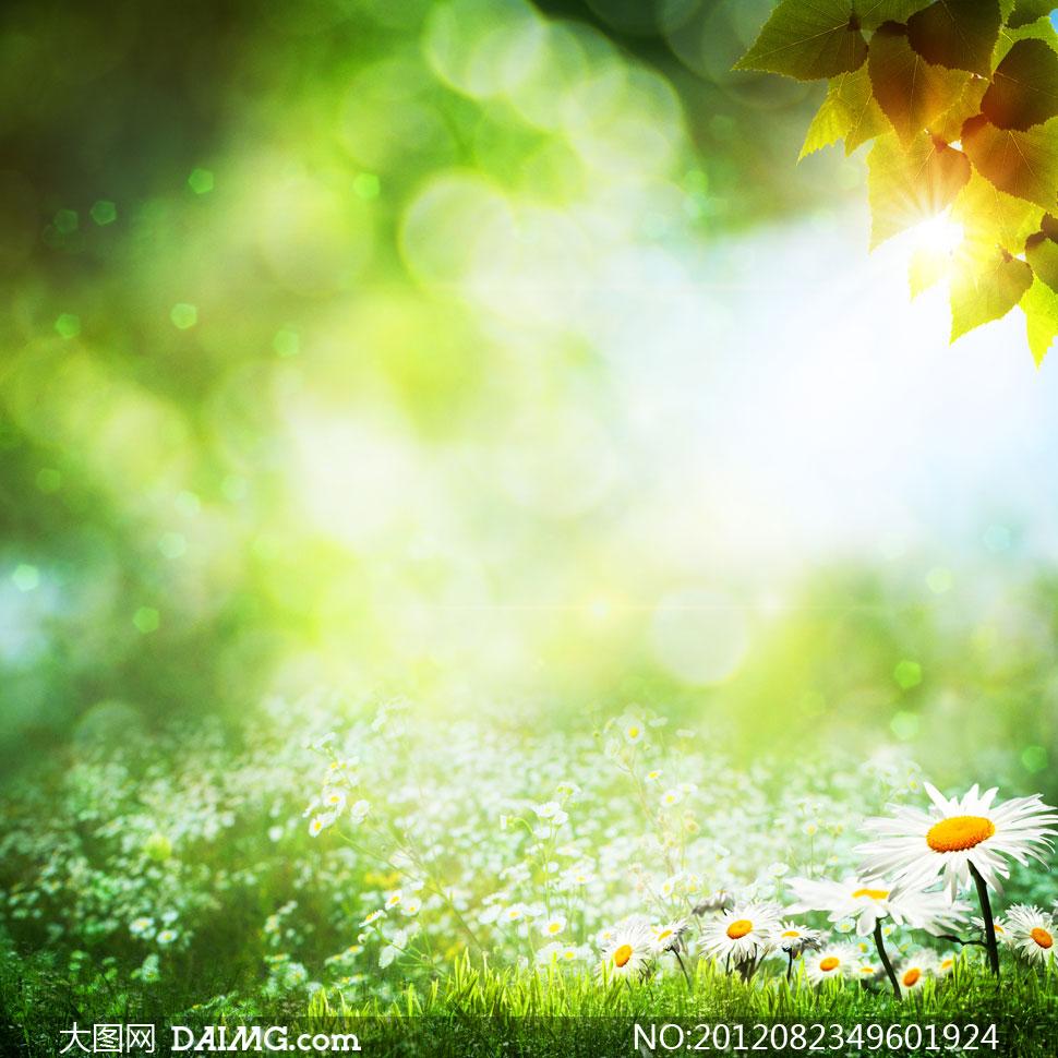 雛菊花草夢幻自然風景攝影高清圖片 - 大圖網設計素材
