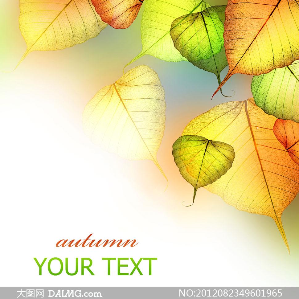 透光性强的秋天树叶摄影高清图片