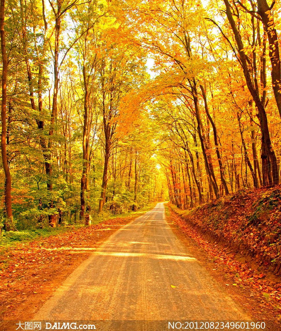 Осень фотообои