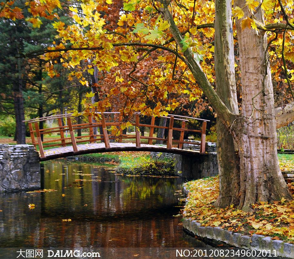 公园的树木与木板桥摄影高清图片