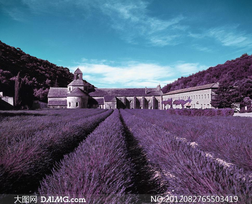薰衣草与欧式房子影楼摄影背景图片