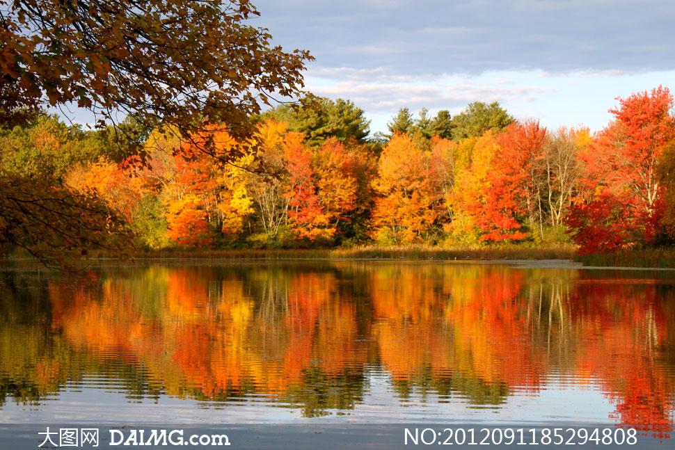 树木大树树林水波涟漪倒影秋天秋季红叶黄叶红色黄色