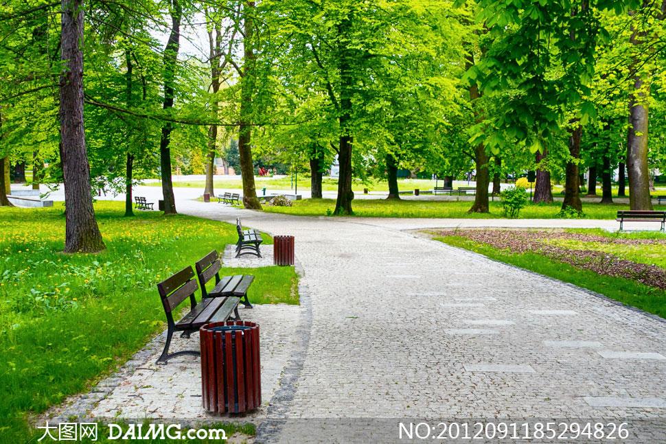 公园里的春夏自然风景摄影高清图片