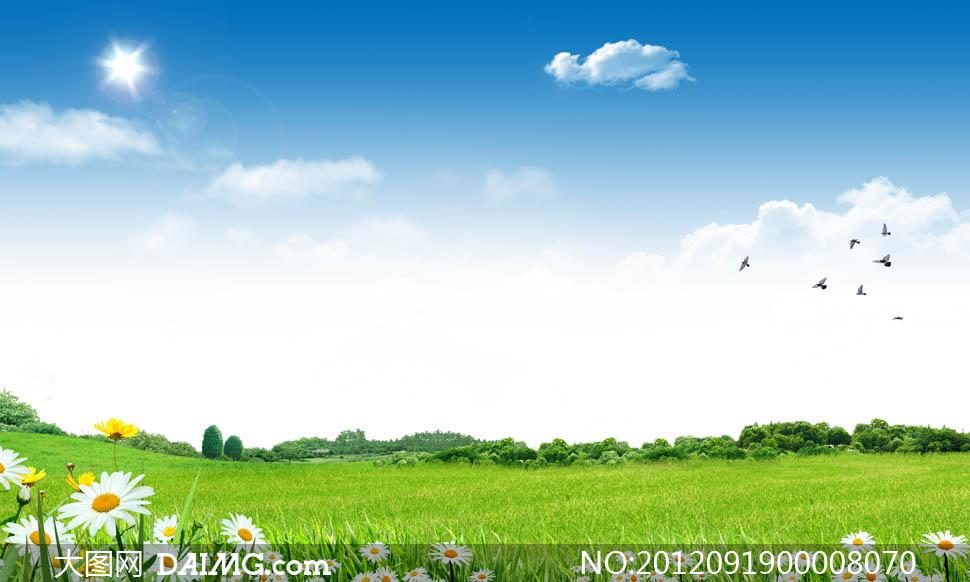 阳光下的草地和菊花psd分层素材 大图网设计素材