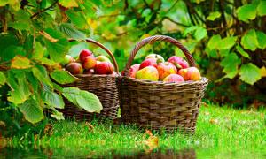 在水边的两个苹果篮子摄影高清图片
