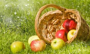 草地上的苹果篮子特写摄影高清图片
