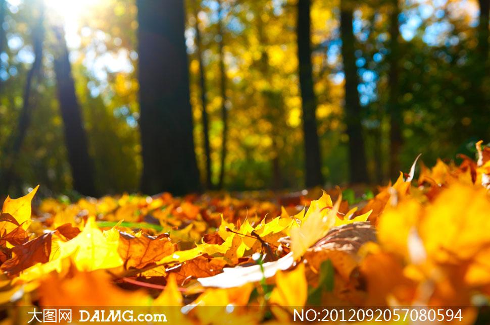 落在树林里的树叶特写摄影高清图片