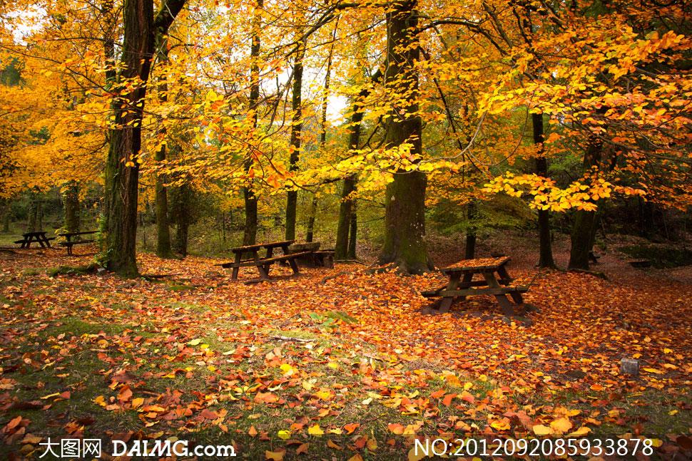 高清图片 自然风景