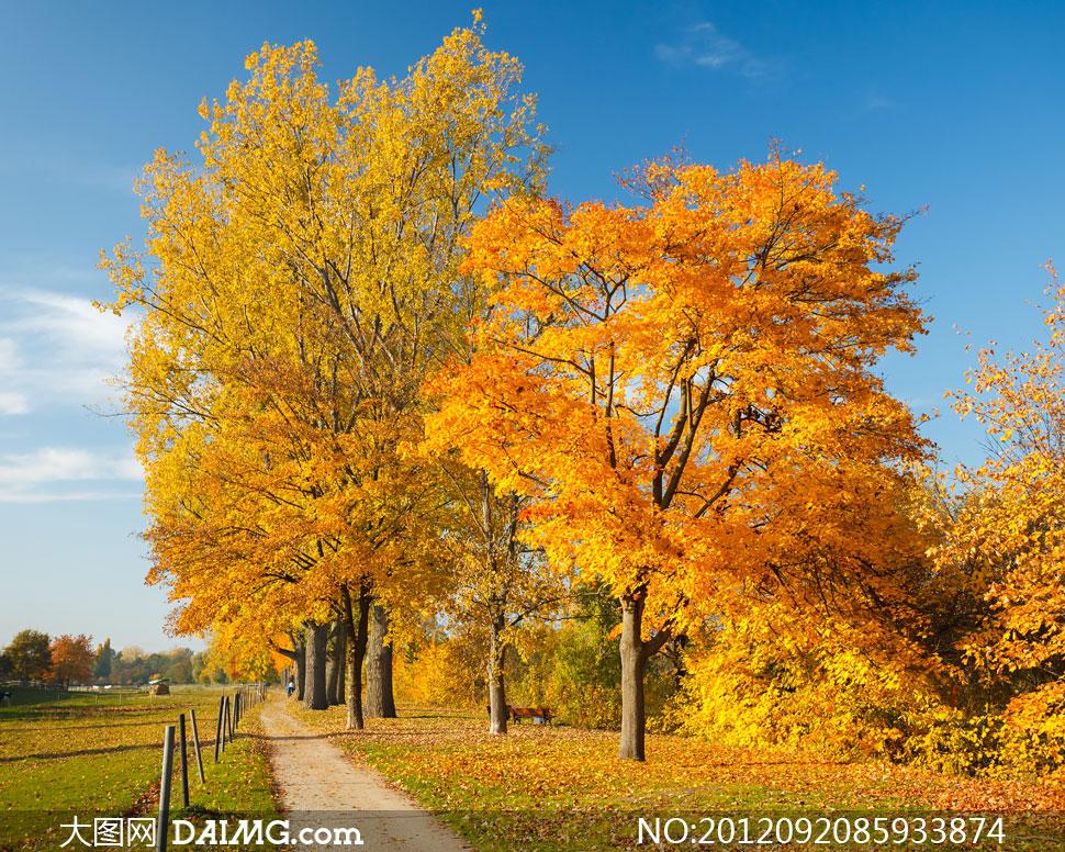大图首页 高清图片 自然风景 > 素材信息          满地的落叶与山林