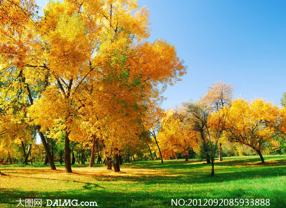 下一篇 麦田大树秋天自然风景摄影高清图片 上