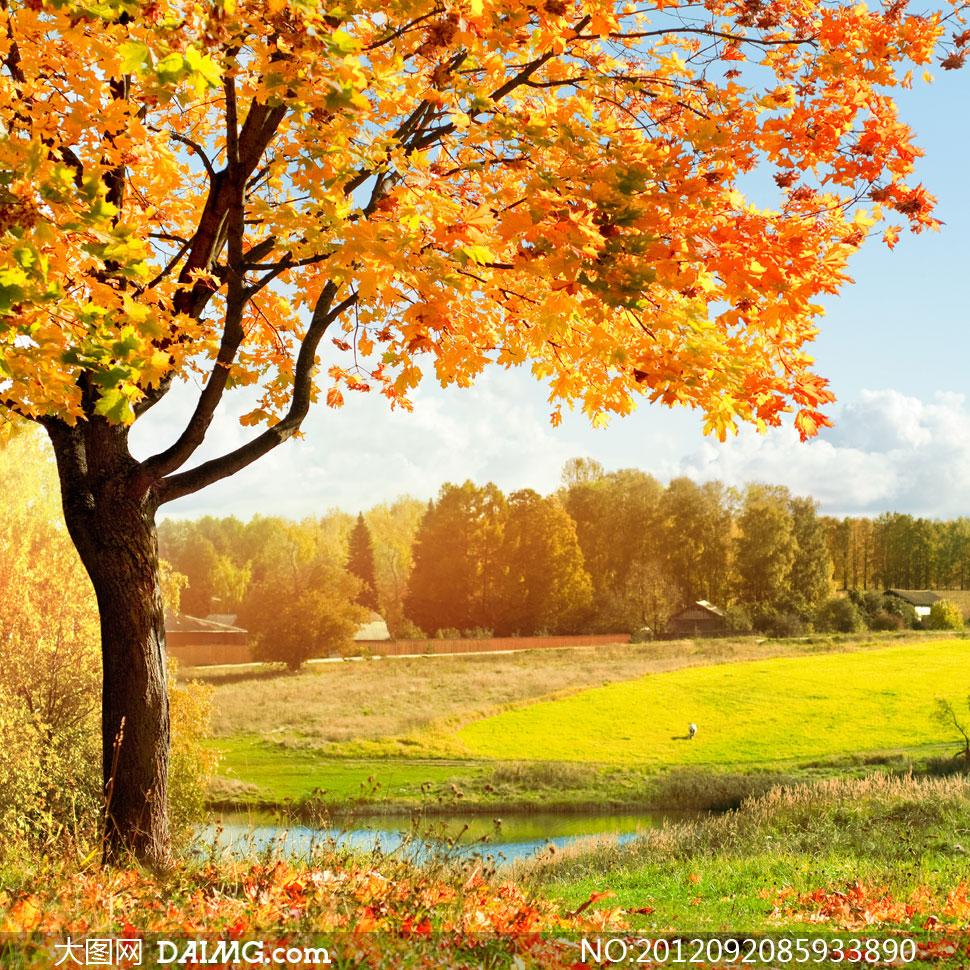 树林风景大图,树林唯美大图,阳谷小树林完整图片 .