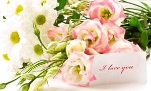 玫瑰花雏菊与白色卡片摄影高清图片