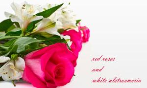 六出花与玫瑰花朵特写摄影高清图片