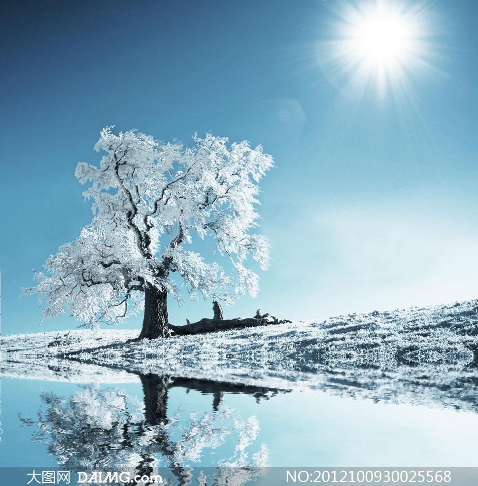 冬之雾凇大树树木风光风景自然冬天冬季雪地河水小河倒影太阳光光线