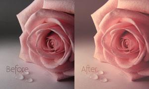 玫瑰花淡雅粉红效果色阶预设