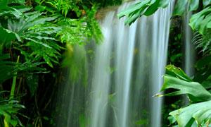 植物绿叶映衬下的瀑布摄影高清图片