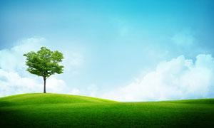 蓝天白云草地大树风光摄影高清图片