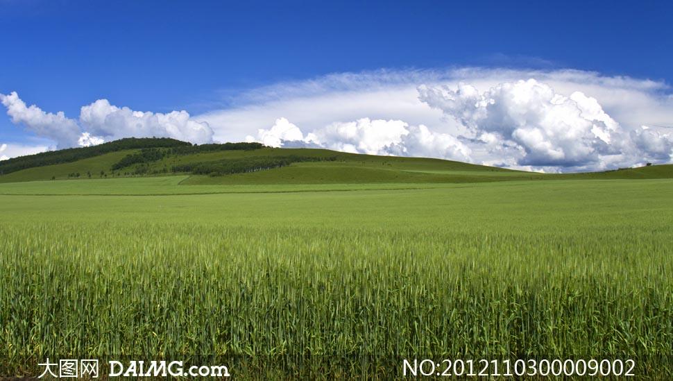 贴图 素材/草原上的麦田摄影图片...