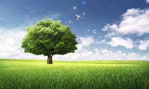 蓝天白云树木与大草原PSD分层素材