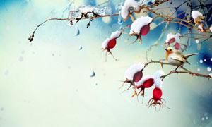 冬季枝头积雪效果摄影图片