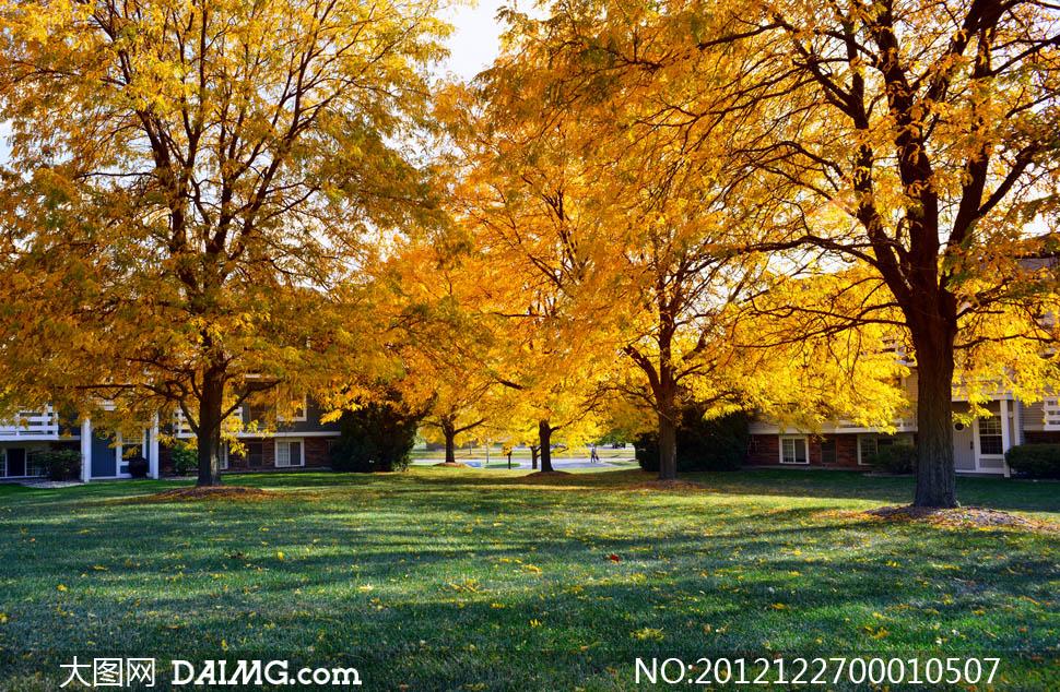 秋季公园树林风光摄影图片