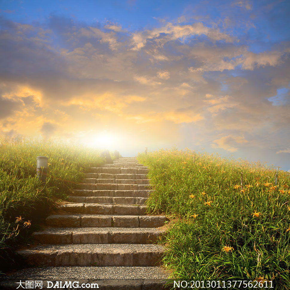 風景風光天空云層云彩多云鮮花花朵花卉花草草叢小路植物野外田野戶外