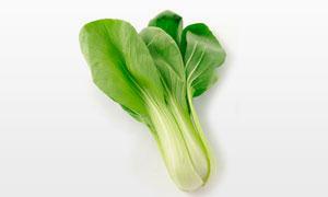 一颗新鲜的小油菜特写摄影高清图片