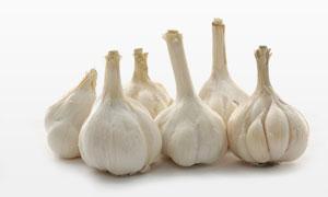 优质品种大蒜近景特写摄影高清图片