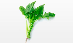 一颗新鲜菠菜近景特写摄影高清图片