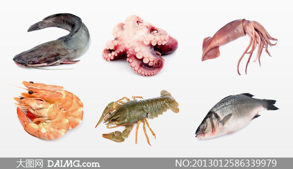 鱿鱼乌贼虾鱼等海产品摄影高清图片图片