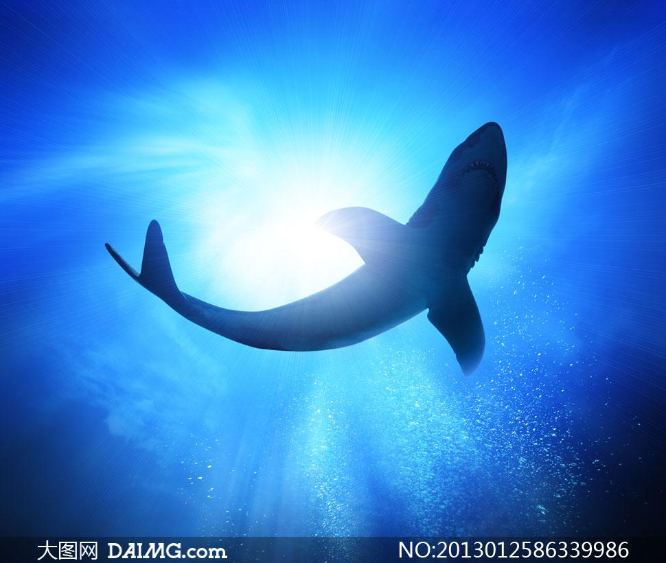 高清摄影大图图片素材自然风景风光海水大海海底水波光线阳光鲨鱼
