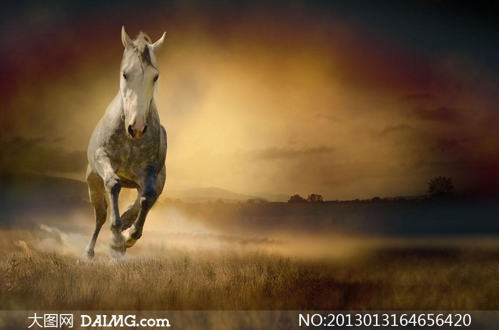身上沾上泥的高大骏马摄影高清图片图片