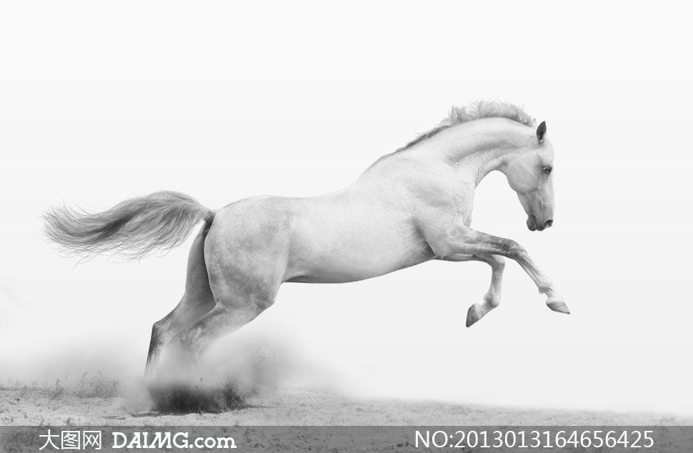 奔腾在地上的白色骏马摄影高清图片 - 大图网设计素材图片