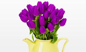 紫色的郁金香花朵静物摄影高清图片