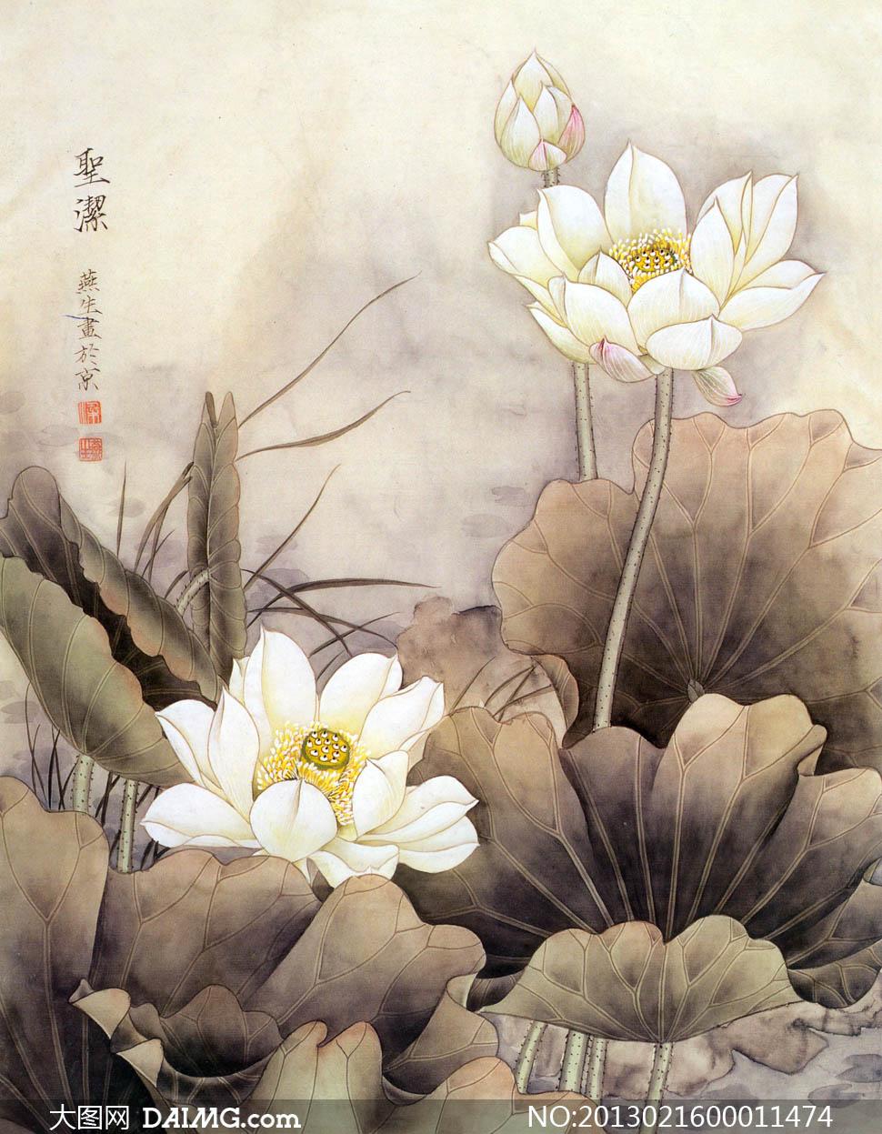 中国风荷花工笔画设计图片素材
