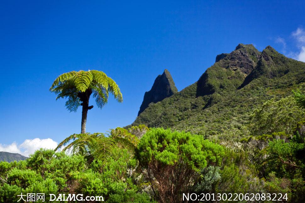 蓝天白云山坡上的树木摄影高清图片